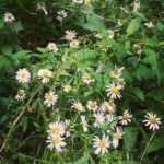 Daisies in the wild DistractedbyBeauty